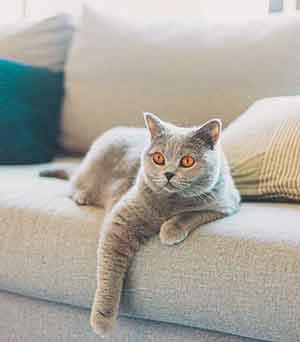 kat op de bank geplast